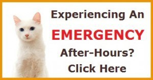 Cat emergency button final