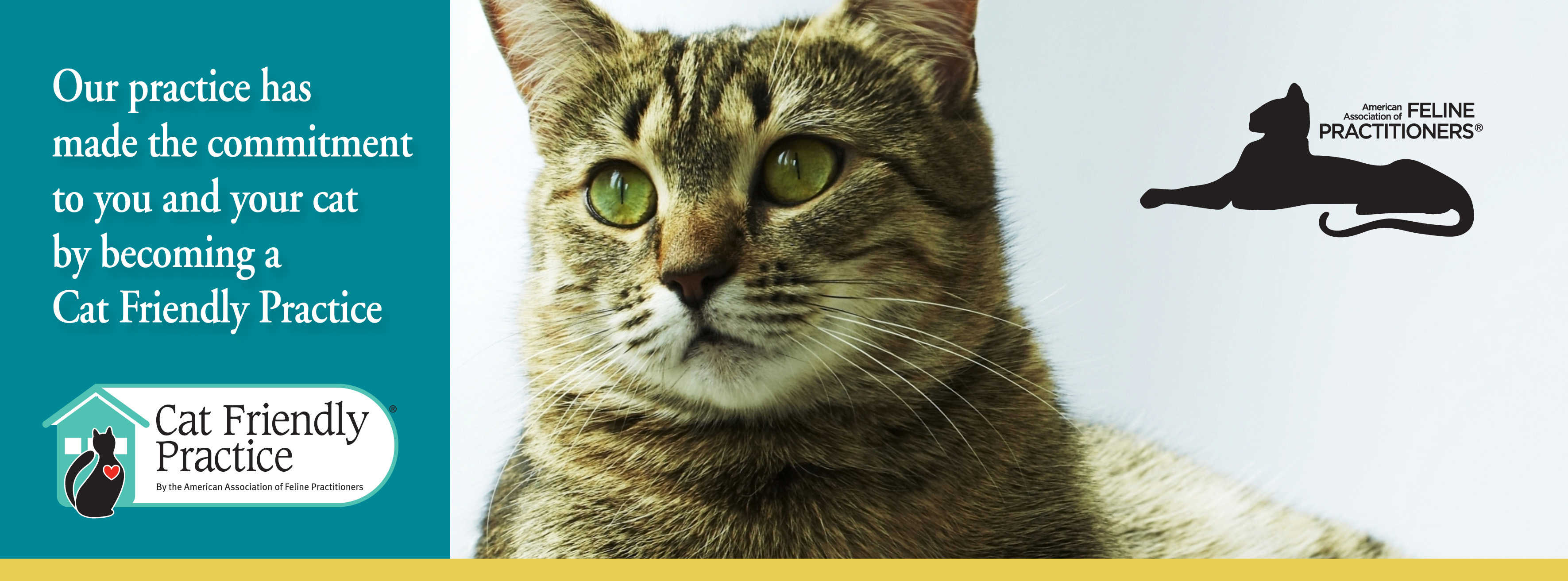 Our practice has made a commitment to you and your cat by becoming at cat friendly practice. The background photo is a brown and beige cat with green eyes