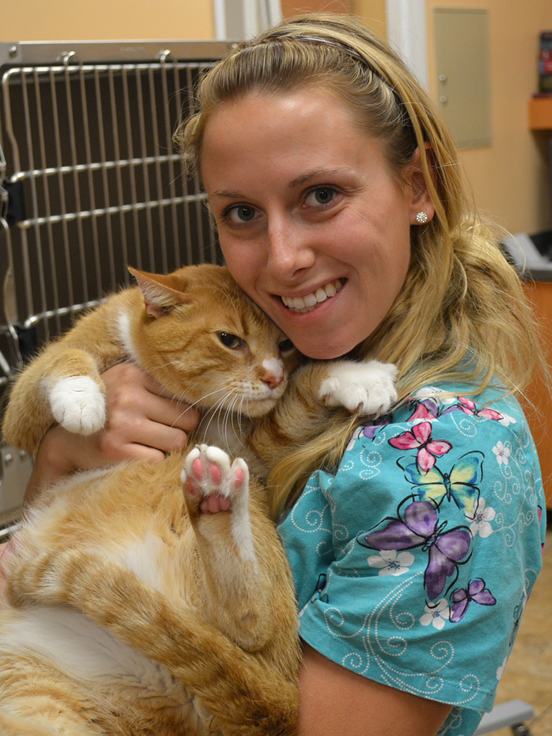 A team member holding a orange and white striped cat