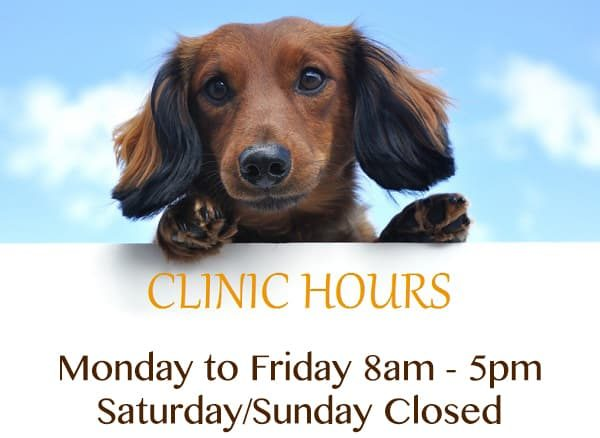 Indian Street vet clinic hours. Monday to Friday 8am to 5pm. closed Saturdays and Sundays